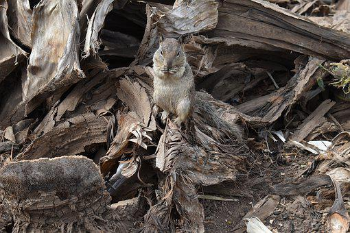 Squirrel, Wood, Nature, Animal, Rodent, Cute, Mammal