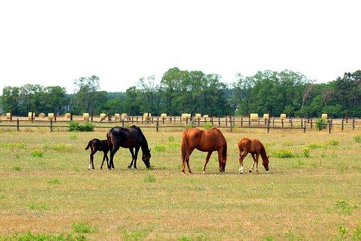 Horses, Pasture Land, Animals, Meadow, Landscape, Grass