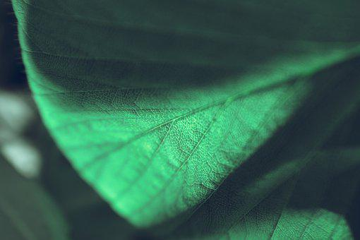 Leaf, Texture, Green, Pattern, Nature, Plant, Foliage