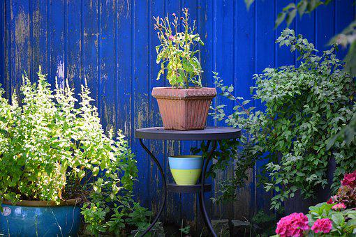 Pot, Garden, Blue, Garden Shed, Nature, Summer, Plant