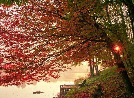 Landscape, Nature, Park, Scenic, Forest, Autumn, Season