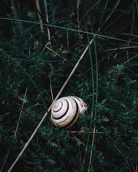 Nature, Green, Snail, Summer, Grass