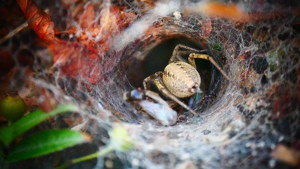 Spin, Spider Web, Prey, Bug, Nature, Eng, Arachnophobia