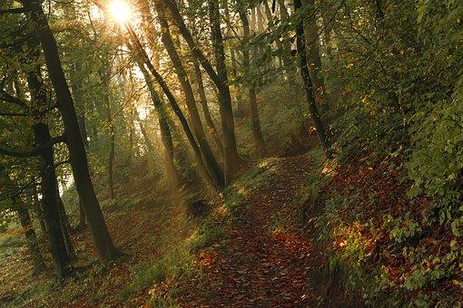 Outdoor, Sunlight, Morning, Sunbeam, Light, Autumn