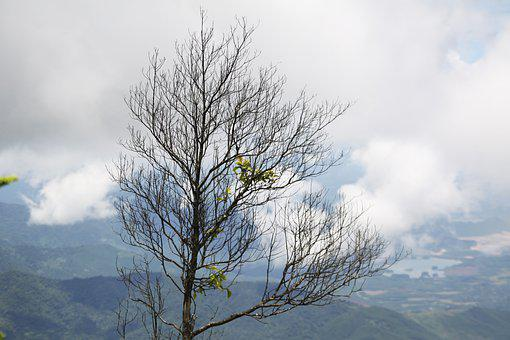 Mountains, Tree, Landscape