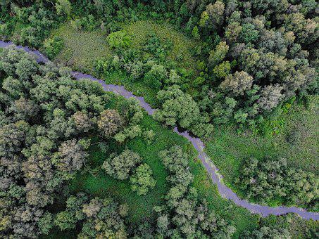 Forest, Landscape, Drone, Russia, Green, Trees, Tourism