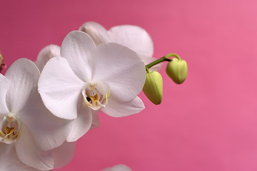 Orchid, Tropical, Flower, Nature, Natural, Exotic