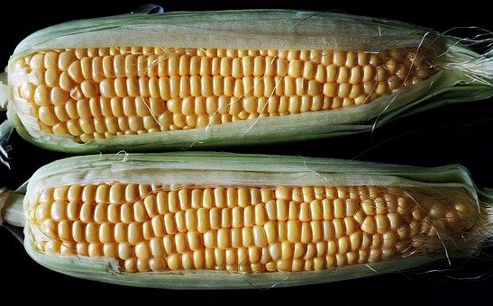 Sweet Corn, Vegetable, Healthy Food, Cooking, Garden