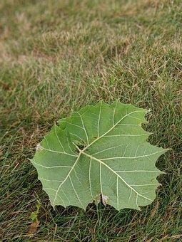 Leaf, Fall, Autumn, Green, Yard, Nature, Colorful