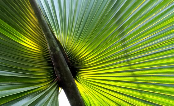 Palm Leaf, Caribbean, Island, Summer, Beach, Paradise