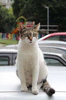 Cat, White, Colorful, Beautiful, Watch, Sitting