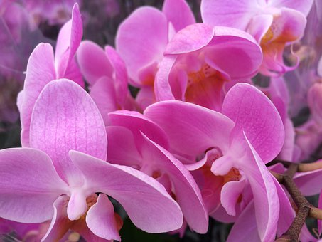 Orchids, Admiration, Beauty, Nature, Plant, Summer