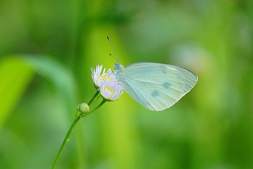 Butterfly, Flower, Insect, Nature, Grass, Garden, Green