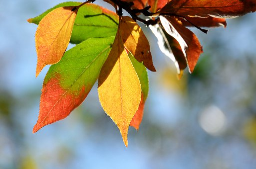 Leaf, Autumn, Nature, Tree, Coloured, Orange, Yellow