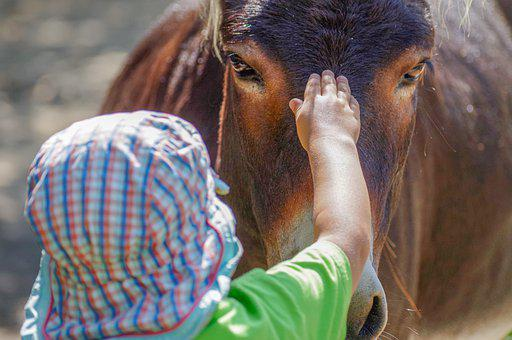 Donkey, Child, Stroke, Contact, View