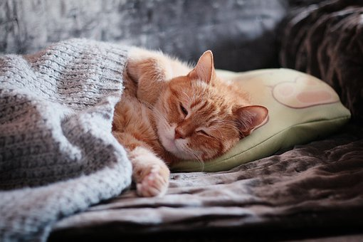 Cat, Red Cat, Red-headed Cat, Kitten, Cute, Fur, Dream