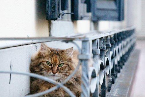 Cat, Grumpy, Eyes, Face, Cat Portrait