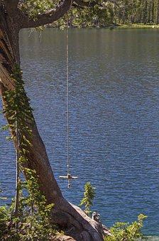 Rope Swing, Tree, Lake, Summer, Trees, Outdoors, Swing