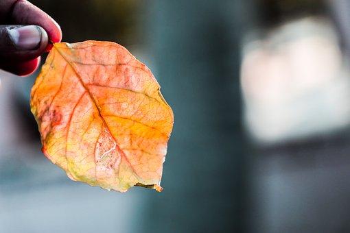 Nature, Tree, Landscape, Trees, Green, Fantasy, Autumn