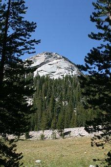 Pine Trees, Nature, Mountain, Landscape, Yosemite