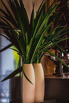 Blade, Vase, Green, Bouquet, Nature