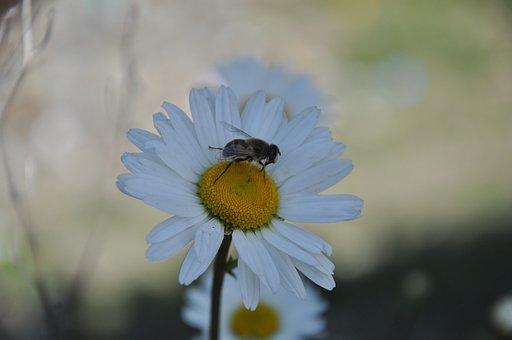 Garden, Background, Flower, Nature, Spring, Summer