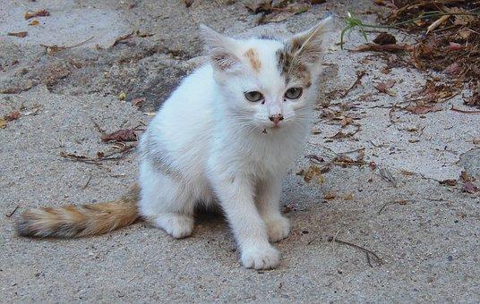 Cat, Puppy, Kitten, Pet, Cute, Animals, Pets, Feline