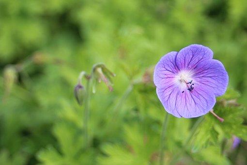 Flower, Hamburg, Nature, Summer, Purple, White