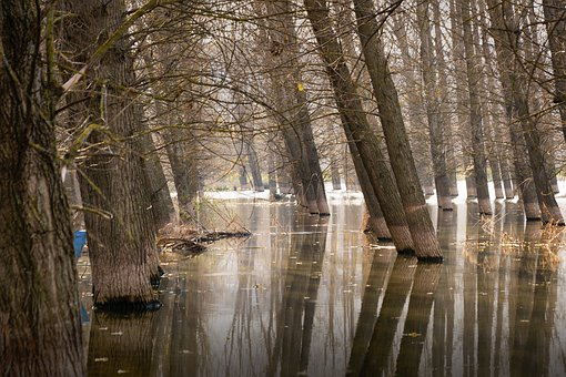 Trees, Lake, Water, Trees In Water, River, Forest