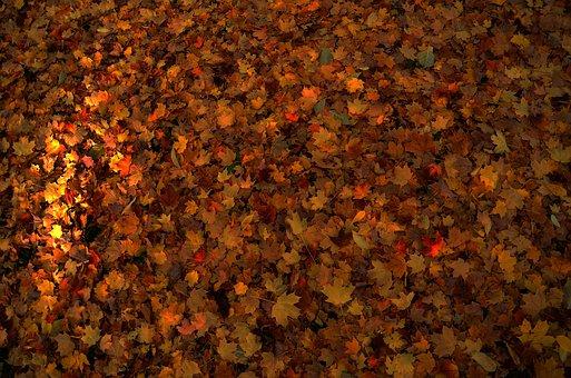 Leaves, Autumn, Nature, Colourful, Orange, Seasonal