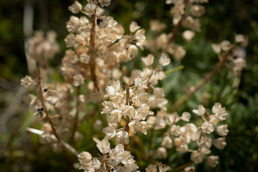 Garden, Nature, Seeds, Seed Capsules, Summer, Faded