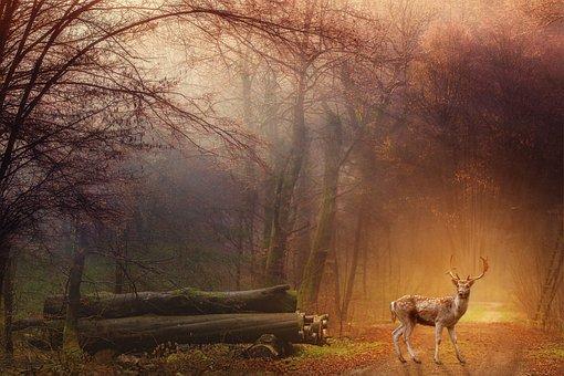 Fantasy, Forest, Deer, Trees, Blaze, Mystic, Magic