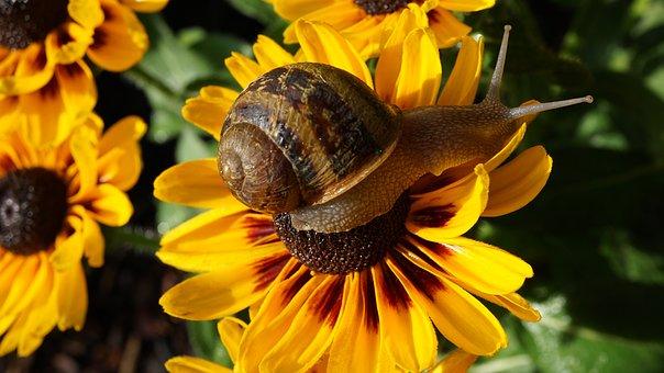 Snail, Animal, Animal Portrait, Snail Portrait, Shell