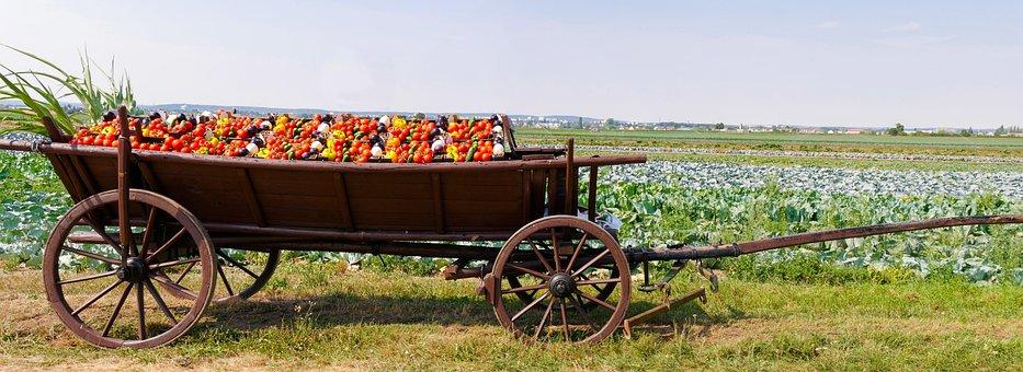 Eat, Drink, Agriculture, Food, Arable, Vegetables