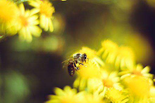 Bee, Macro, Insect, Close Up, Flowers, Nature