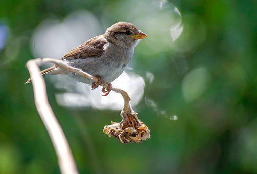 Sparrow, Sperling, Bird, Sit, Animal World, Branch