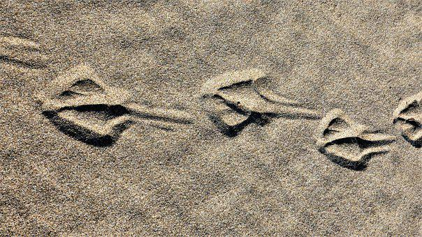 Beach, Sand, Traces, Bird, Water, Holiday, Summer