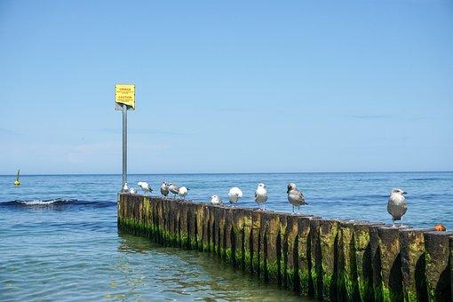 Water, Sea, Ocean, Breakwater, Seagull, Birds, Herd