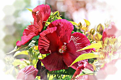 Hibiscus, Dinner, Plate, Red, Flower, Bloom, Garden