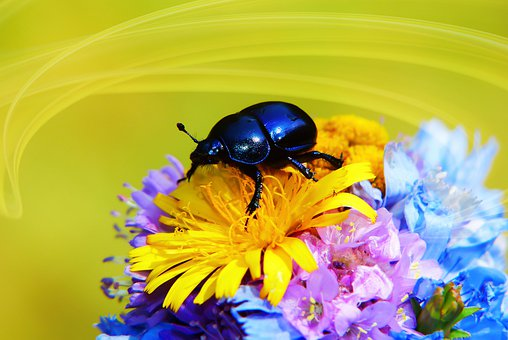 Forest Beetle, The Beetle, Flowers, Bouquet, Posts