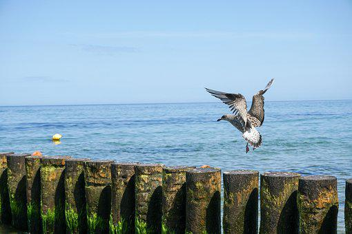 Seagull, Sea, Breakwater, Bird, Water, Ocean