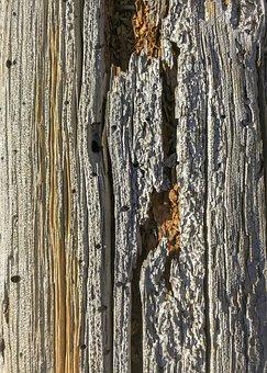 Wood, Closeup, Texture, Nature, Natural, Wooden, Bark