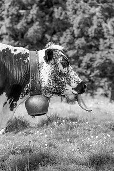Cow, Vosges, Language, Nature, Animals, Black, White