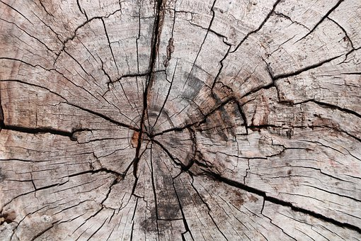 Strain, Tree, Forest, Root, Wood, Death, Texture, Dry