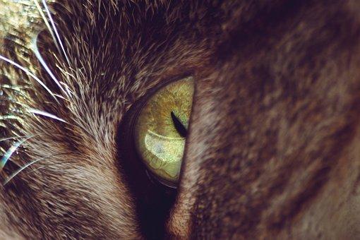 Cat Eye, Macro, Animal, Cute, Head, Domestic, Whiskers