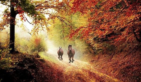 Horse, Horses, Equine, Animals, Nature, Mane, Wild