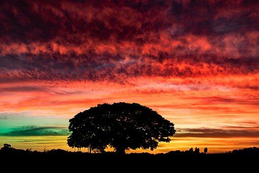 Sky, Tree, Landscape, Nature, Clouds, Twilight, Field