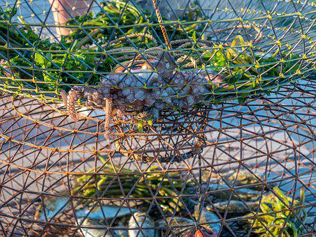 Fish, Web, Fishing, Fishing Net, Fisherman, Sea