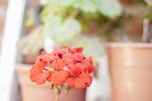 Flores, Flower, Plant, Nature, Flora, Flor, Outdoor