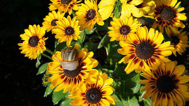 Coneflower, Snail, Flowers, Bloom, Summer, Animal World